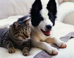 Як пережити смерть улюбленого домашньої тварини фото