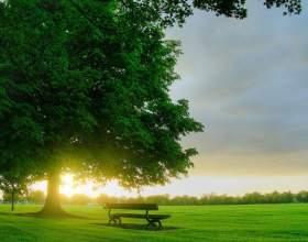 Як зробити ранок яскравіше: 7 корисних звичок фото