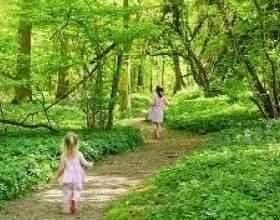 Лісова пробіжка фото