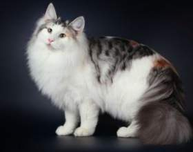 Міфи і правда про кішок: чи можна цілувати, дресирувати і виховувати цих тварин? фото