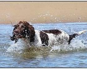 Релаксація. Вправа «мокрий пес» фото