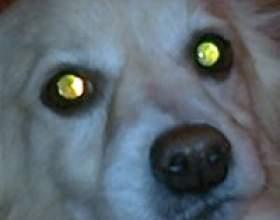 Собака - психолог фото
