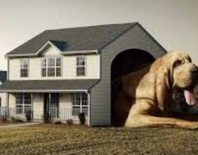Собака в будинку: чи можна ужитися з песиком в одній квартирі? фото