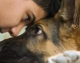 Погляд очі в очі: чи допустимо зоровий контакт з собакою? фото